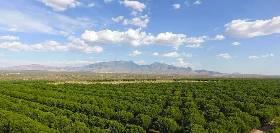 Pecan groves skirt the east side if Green Valley, making the town a lush oasis in the Sonoran Desert. The nearby Santa Rita Mountains add to the region's varied topography.